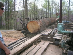 A Real Monster Oak Log Takes Its First Pass
