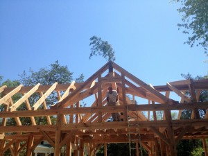 All common rafters installed -- the frame is complete!